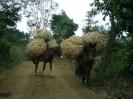 Images of Guatemala